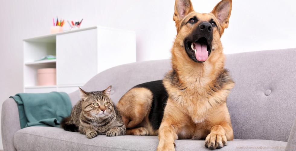 Einrichtungstipps Für Das Wohnen Mit Haustieren Xxxlutz