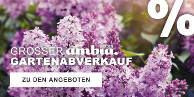 Ambia Garden  Großer Gartenabverkauf