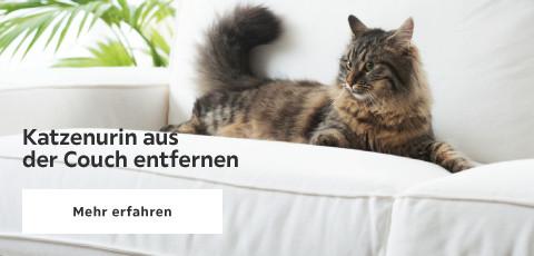 Katzenurin aus der Couch entfernen