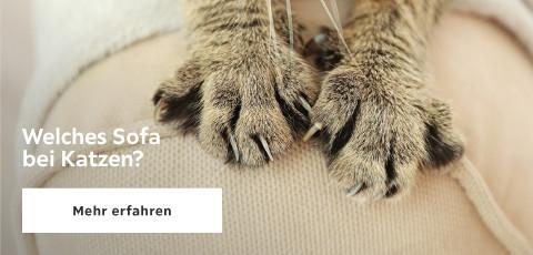 Welches Sofa bei Katzen?