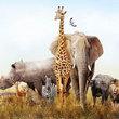Doma jako na safari