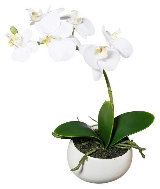 KUNSTBLUME Orchidee - Creme/Weiß, LIFESTYLE, Kunststoff/Metall (23cm)