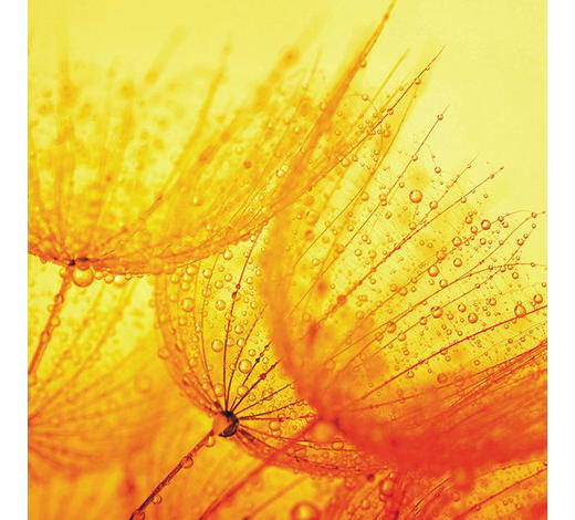 GLASBILD - Multicolor, Natur, Glas (20/20/1,40cm)