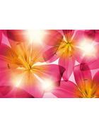 FOTOTAPETA POLETNO SONCE 8-928 - roza/rumena, Trendi, papir (368/254cm)