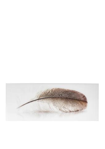GLASBILD Federn  - Beige/Braun, Design, Glas (125/50cm) - Monee