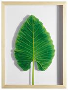 Blätter KUNSTDRUCK - Naturfarben/Grün, Design, Holz/Kunststoff (30/40cm)