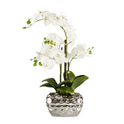 KUNSTBLUME Orchidee  - Creme, Basics, Kunststoff/Textil (54cm) - Ambia Home