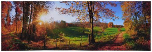 Bäume KEILRAHMENBILD - Multicolor, Natur, Holz/Papier (180/60/3cm)