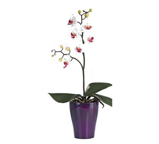 ROSTLINA UMĚLÁ, orchidej - bílá/zelená, Basics, umělá hmota (09/09/40cm)