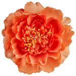 RAFFHALTER  - Orange, Basics, Textil (11cm) - Esposa