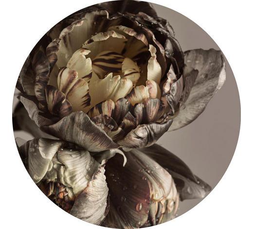 BILD - Multicolor, Design, Holzwerkstoff (70cm) - Monee