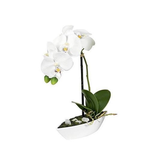 KUNSTPFLANZE Orchidee - Creme/Grün, Basics, Kunststoff/Textil (28cm)