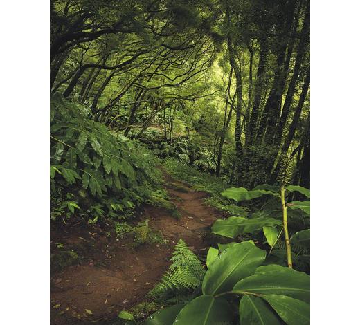 VLIESTAPETE  - Natur (200/250/cmcm)