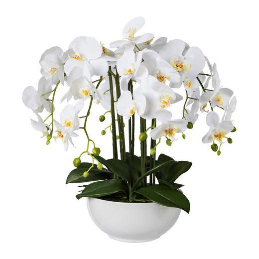 KUNSTBLUME Orchidee - Weiß/Grün, Trend, Kunststoff (54cm)