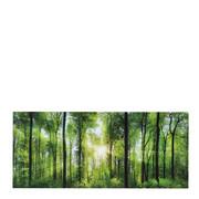 DEKOPANEEL - Multicolor, KONVENTIONELL, Holz/Papier (50/115/3,30cm) - Eurographics