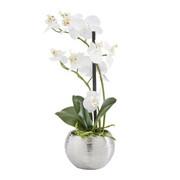 KUNSTPFLANZE Orchidee  - Creme/Grün, Basics, Kunststoff (30cm) - Ambia Home