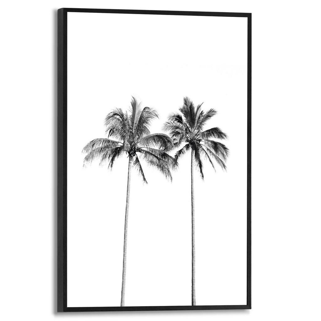 Reinders! Bild palmen
