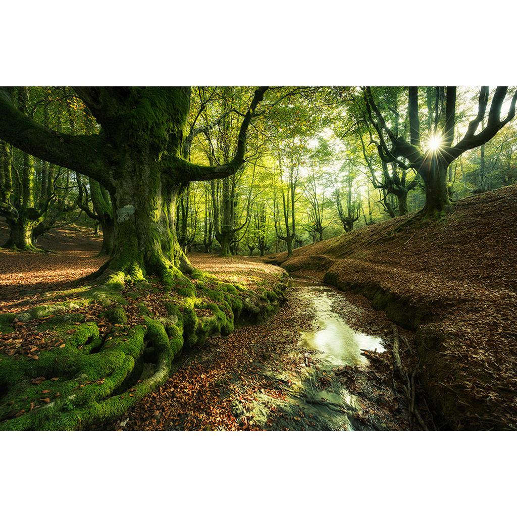Wiedemann Bild Foresttale