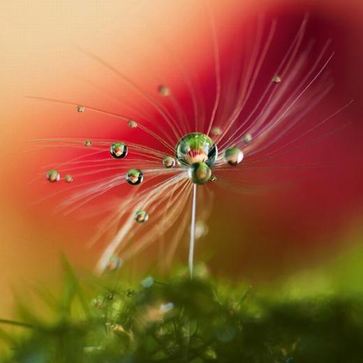 Blumen GLASBILD - Multicolor, Basics, Glas (50/50/2cm) - Eurographics