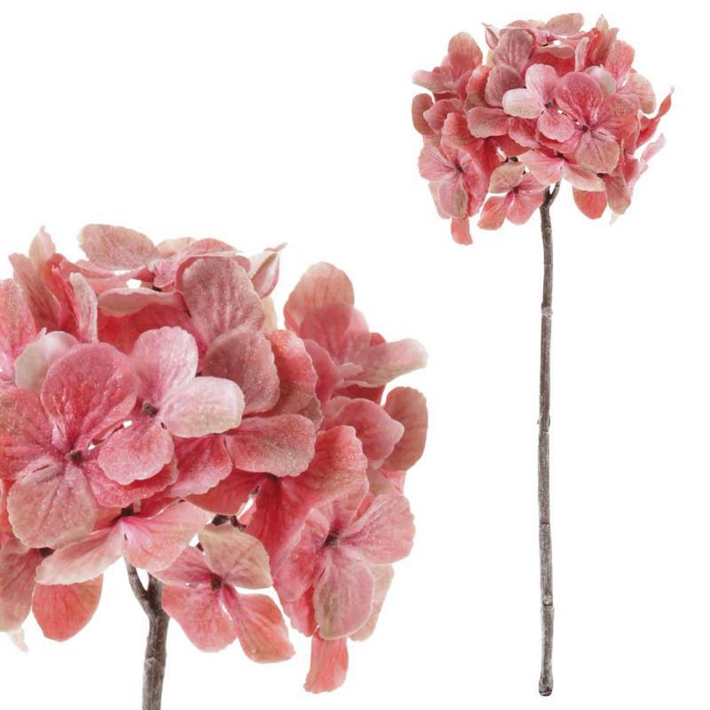 HORTENZIE, - hnědá, pink