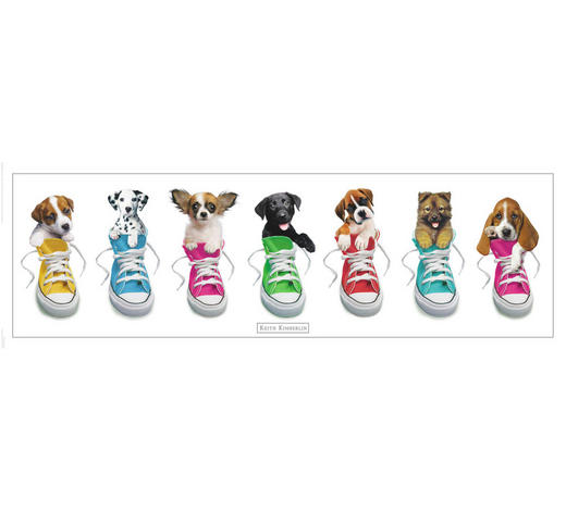 DEKOPANEEL - Multicolor, Basics, Holzwerkstoff (30/90cm) - Reinders Next