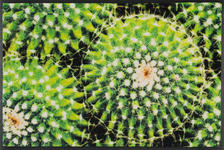 FUßMATTE 50/75 cm Kaktus Grün  - Grün, Basics, Kunststoff/Textil (50/75cm) - Esposa