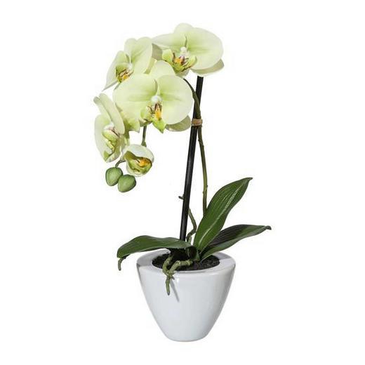 KUNSTBLUME Orchidee - Creme/Grün, LIFESTYLE, Kunststoff/Metall (36cm)