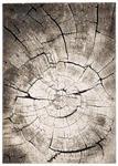 WEBTEPPICH  80/150 cm  Anthrazit, Dunkelgrau, Grau - Dunkelgrau/Anthrazit, Basics, Textil (80/150cm) - Novel