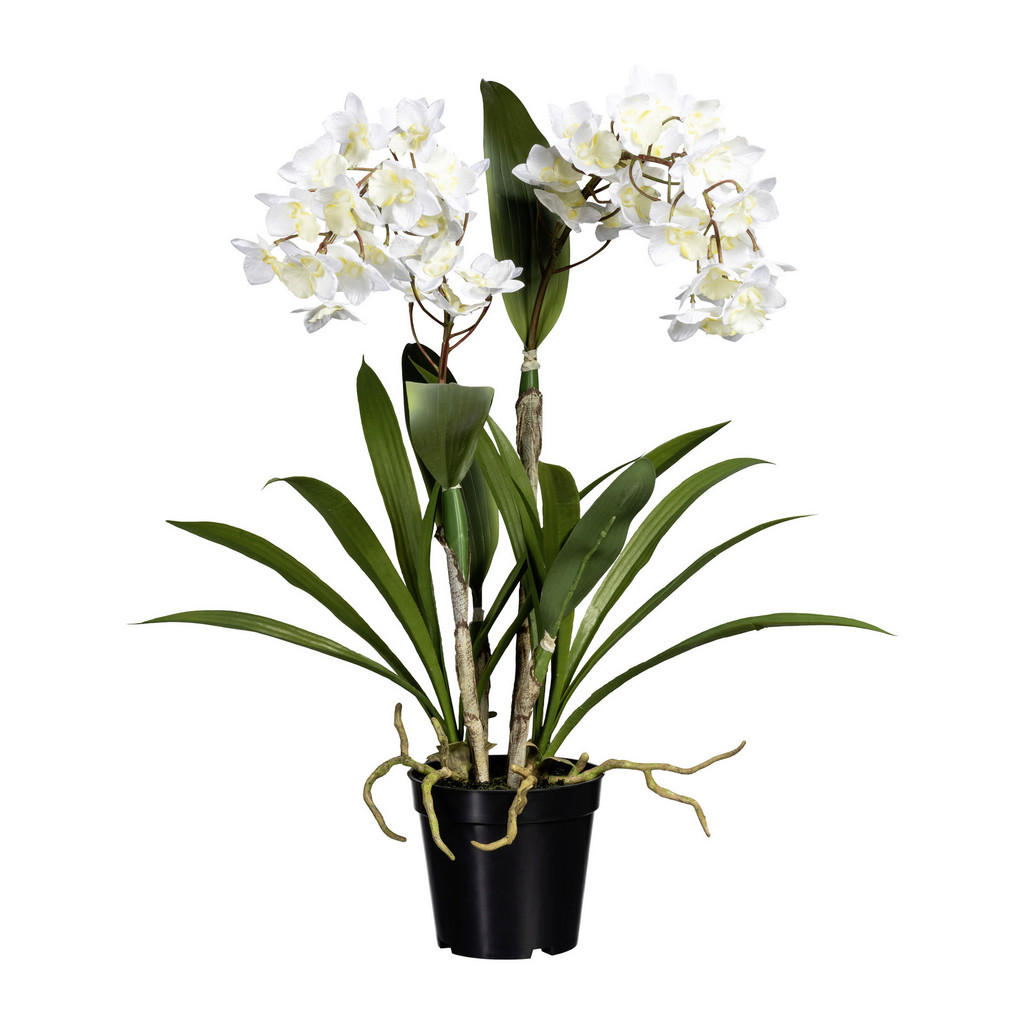 XXXLutz Kunstpflanze orchidee