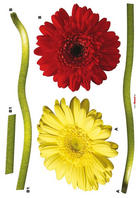 Blumen DEKOSTICKER - Klar, Basics, Kunststoff (50/70cm)
