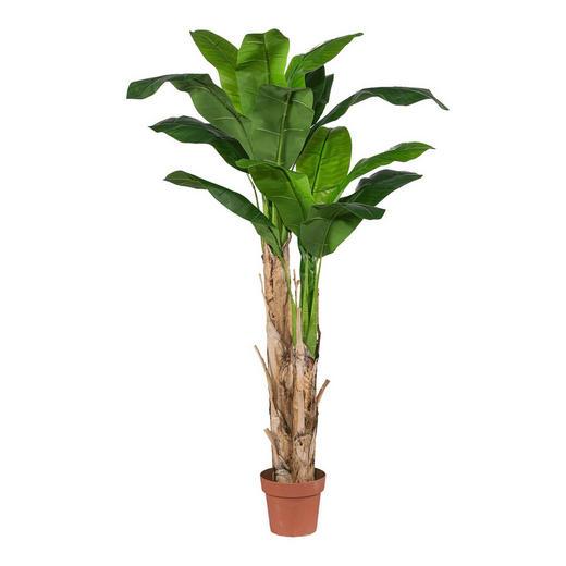 Bananenpflanze - Grün, Basics, Kunststoff (210cm)
