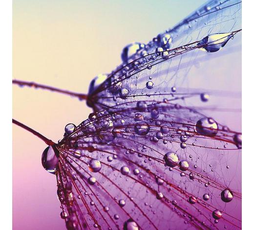 GLASBILD - Multicolor, Natur, Glas (30/30/1,40cm)