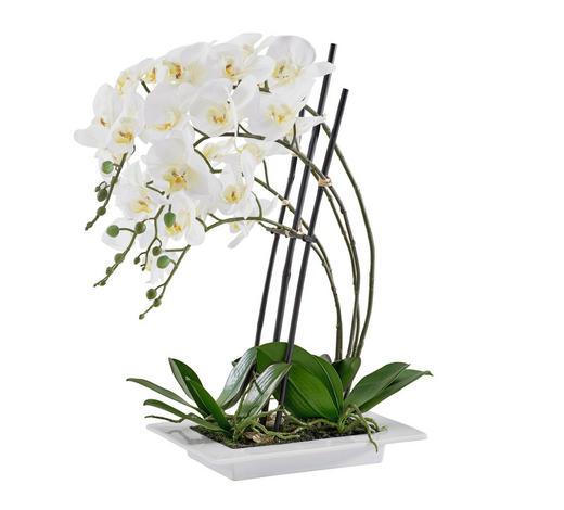 ORCHIDEE - Creme/Weiß, Basics, Kunststoff (62cm)