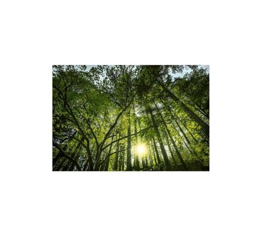 Bäume GLASBILD  - Multicolor, Natur, Glas (120/80cm) - Monee