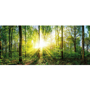 DEKOPANEEL - Multicolor, KONVENTIONELL, Holz (50/115/2,6cm)