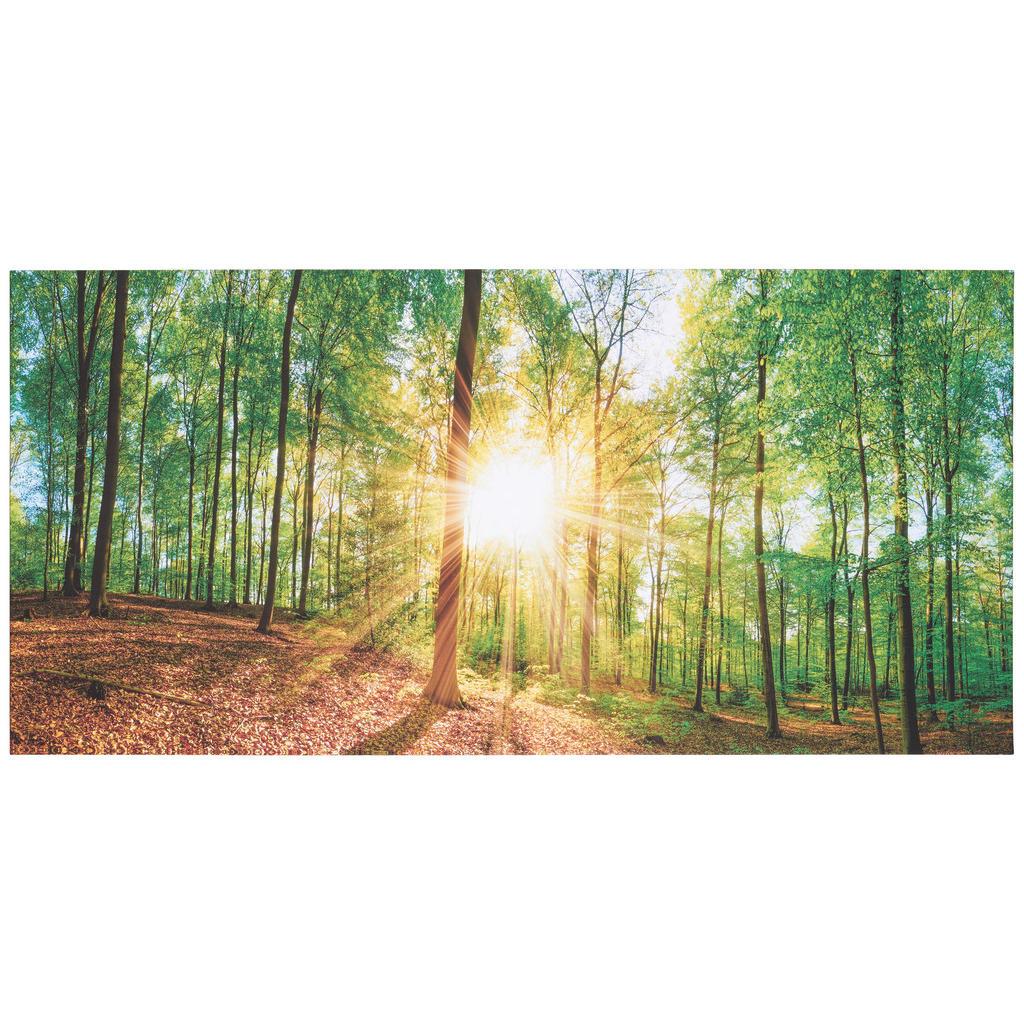 Euroart Keilrahmenbild bäume