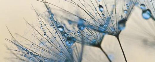 Blumen GLASBILD - Multicolor, Basics, Glas (50/125/2cm) - Eurographics