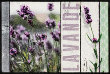 FUßMATTE 50/75 cm Lavendel Hellgrün, Violett - Violett/Hellgrün, Basics, Kunststoff/Textil (50/75cm) - Esposa