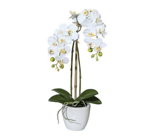 KUNSTPFLANZE Orchidee  - Dunkelgrün/Weiß, Keramik/Kunststoff (43cm)