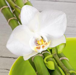 Blumen GLASBILD - Weiß/Grau, LIFESTYLE, Glas (30/30/2.0cm) - Eurographics