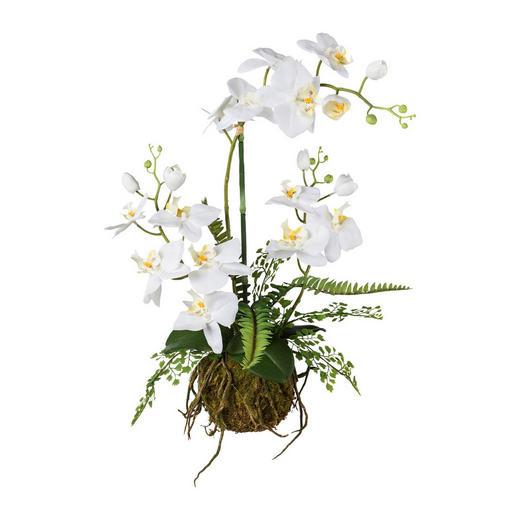 KUNSTBLUME Orchidee - Weiß/Braun, Trend, Kunststoff (55cm)