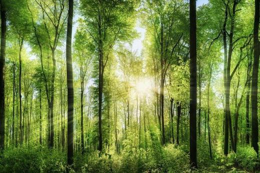 Bäume GLASBILD - Multicolor, Design, Glas (80/120cm)