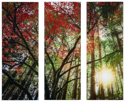 Bäume, Herbst, Landschaft & Natur GLASBILD - Multicolor, Basics, Glas (90/80cm)