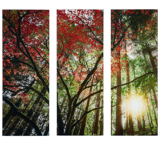 Bäume GLASBILD  - Multicolor, LIFESTYLE, Glas (90/80cm) - Monee