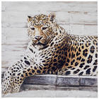 Tiere BILD - Multicolor, Basics, Holz/Textil (80/80cm)
