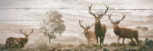 DEKOPANEEL - Multicolor, LIFESTYLE, Holzwerkstoff (52/156cm) - Reinders Next