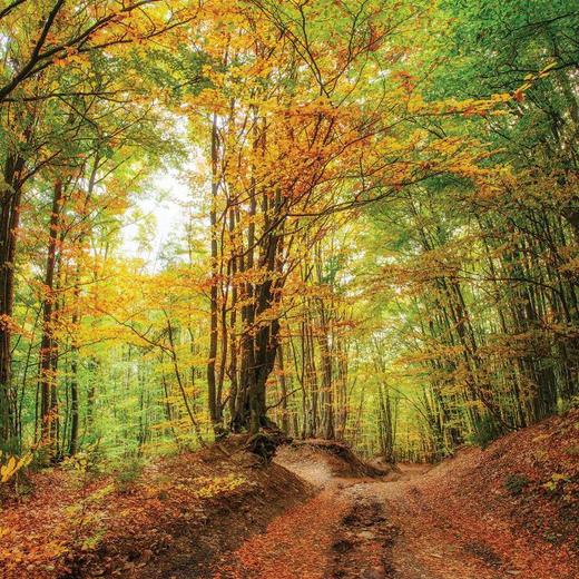Bäume KEILRAHMENBILD - Multicolor, KONVENTIONELL, Holz/Papier (30/30/3cm)