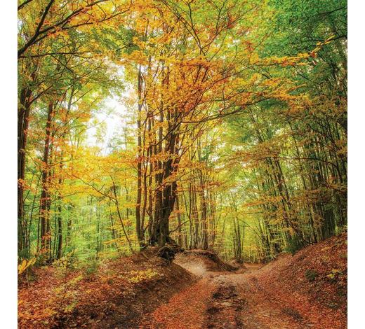 OBRAZ S NAPÍNACÍM RÁMEM, stromy, 30/30/3 cm - vícebarevná, Konvenční, dřevo/papír (30/30/3cm)