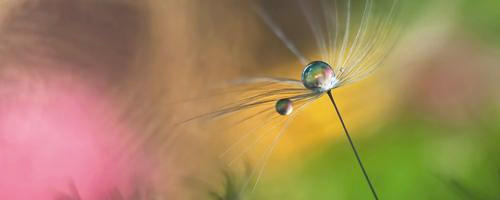 GLASBILD - Multicolor, Basics, Glas (50/125/2cm) - EUROGRAPHICS