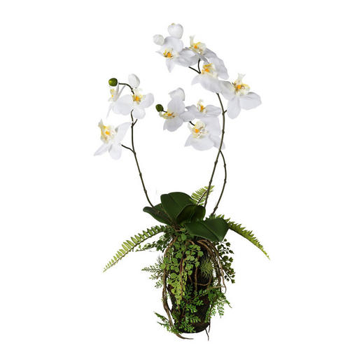 KUNSTBLUME Orchidee - Weiß/Braun, Trend, Kunststoff (63cm)
